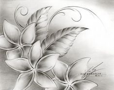 I started some pencil drawings of flowers around the house. I really enjoyed the drawings. There is a nice balanc...