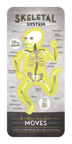 The Skeletal System Anatomy Print by Rachelignotofsky on Etsy, $27.00