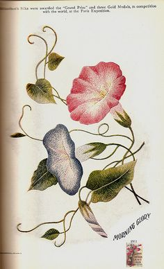 Richardson's morning glory 1911 | Flickr - Photo Sharing!