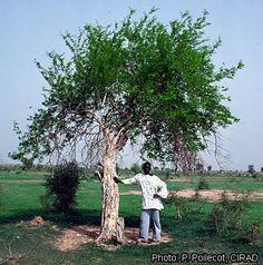 Manual de claras para repoblaciones de pino pi onero en for Libro viveros forestales