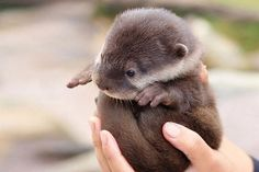 These 20 Baby Animals Will Make Your Heart Explode. I Can't Get Over #3!