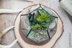 Easy Terrarium Idea: Succulent Planter - Consumer Crafts