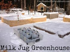 DIY Milk Jug Greenhouse – Winter Sowing