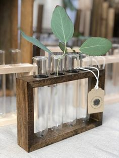 Plant Propagation Station with Glass Vases