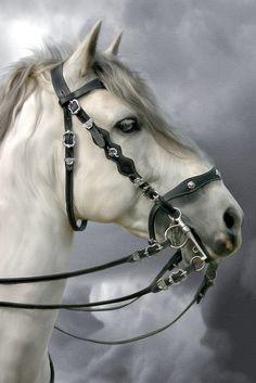 Andalusian Horse, Friesian Horse, Arabian Horses, Most Beautiful Horses, Animals Beautiful, Medieval Horse, Majestic Horse, Horse Drawings, White Horses