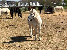 Ich lieb Pferde sie bedeuten mir sehr viel 🥺 Helle Wallpaper, Horses, Animals, Animales, Animaux, Horse, Animal, Animais, Dieren