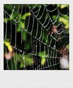 spider web   Flickr Spider Art, Spider Webs, Waterfall Photo, Charlottes Web, Witch Cat, Alternative Art, Photography 101, Holidays Halloween, Aphrodite
