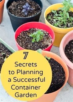 You don't have to have a huge garden to give nature a home. If you've all got a small garden or a patio then putting plants in containers is the way forward. Here's 7 secrets to successful container gardening to get you started #homesfornature  #containergardening