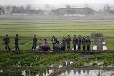 North Korean band...Wearing military jackets and playing and accordion, the musicians performed 'elating and inspiring' music to the rice paddies.