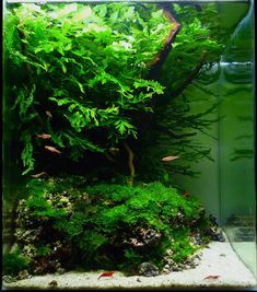 Aquatic Scapers Europe - International Aquascaping Contest 2010 Results
