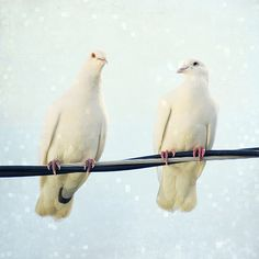 Love doves  ♥ ♥ www.paintingyouwithwords.com