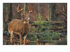 Oklahoma state game animal