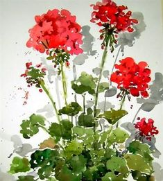 Easy To Grow Houseplants Clean the Air Cindy Parker Watercolor Watercolor Pictures, Watercolor Cards, Watercolour Painting, Watercolor Flowers, Painting & Drawing, Watercolors, Art Floral, Illustration Blume, Red Geraniums