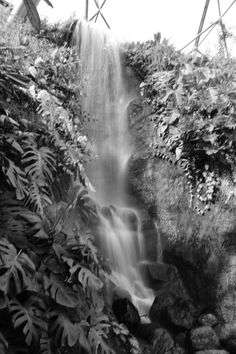 Black and white waterfall in the rainforest Biome