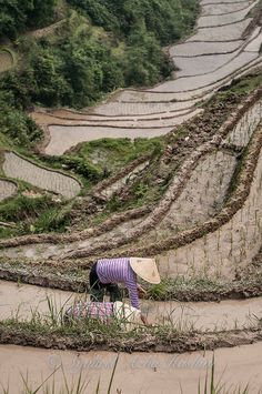 Planting in Guilin, China