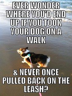 Great quote and a corgi too! :)