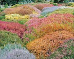 Summer Heather Garden, California by Christopher Burkett
