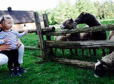 Découvrir les fermes du Québec en famille Bb, Destinations, Travel, Farms, Places To Travel, Viajes, Viajes, Traveling, Tourism