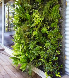 Good one for shade with all those nice ferns.