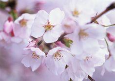 Flores de Primavera I (20 imágenes muy lindas) | Banco de Imágenes Gratis