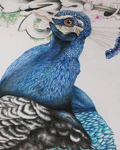 Work in progress #peacock #drawing