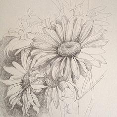 daisy drawing - Google Search