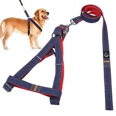 JINCHAO Dog Harness Leash Security Heavy Duty Denim Dogs Adjustable No-Pull Harness Cat Leash Collar for Large/Medium/Small Pet Dogs Training Walking Running * Unbelievable dog item right here! : Harnesses for dogs