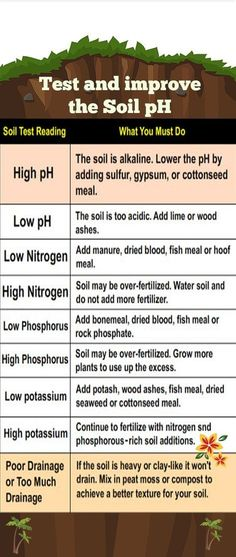 Garden soil ph i didn t think too much about ph as i for Soil 2 year pgdm