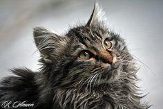 cat #Iran #Tehran