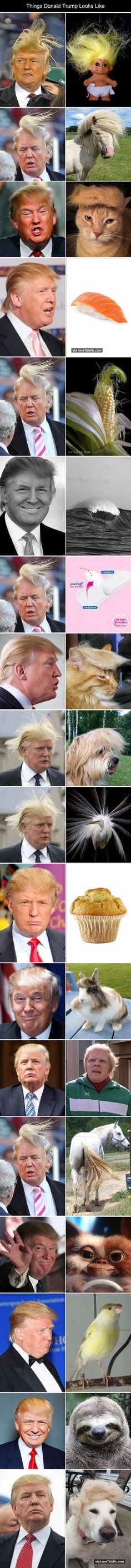 Things Donald Trump Looks Like funny jokes lol funny sayings joke humor funny pictures funny images donald trump