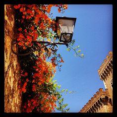 #bolgheri , #flower, #tower