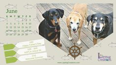 Free Printable June Calendar from Lapdog Creations  Dog Mom | Life with Dogs | Calendar | Planner