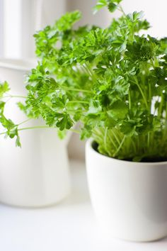 The Nine Easiest Herbs to Grow Indoors - Organized by difficulty, with specific care and helpful tips for growing each herb.