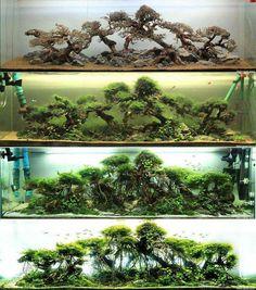 Aquarium Fish Tips Aquarium Design, Reef Aquarium, Aquarium Fish Tank, Fish Tanks, Aquarium Landscape, Nature Aquarium, Aquariums Super, Fish Aquarium Decorations, Fish Tank Design