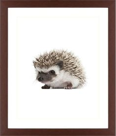 Baby Hedgehog Framed Print, Brown, Contemporary, Cream, White, Single piece, 16 x 20 inches