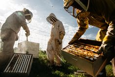 Beekeepers remove honey from their hives in this National Geographic Your Shot Photo of the Day. National Geographic Society, Drone Bee, Beekeeping For Beginners, Bee Farm, Shot Photo, Queen Bees, Your Shot, Bee Keeping, Land Scape