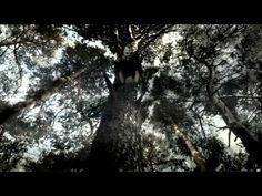 Ewoks: The Battle For Endor (Full Movie) - YouTube
