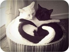 I love this photo make me want to get a black and a white cat :)