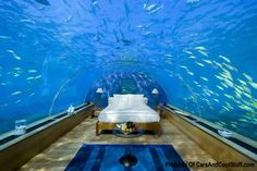 Google Image Result for http://carsandcoolstuff.com/wp-content/uploads/2011/09/fish-tank-room.jpg
