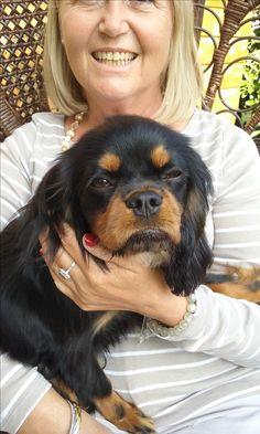 Cavalier King Spaniel, King Charles Spaniel, Cavalier King Charles, Spaniel Puppies, Spaniels, Pets, Fun, Animals, Painting