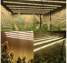 China 600w LED Grow Light Factory, Suppliers and Manufacturers - SLT Cherish Life, Bar Led, Cannabis Growing, Led Grow, Photosynthesis, Bar Lighting, White Light, Beautiful Gardens