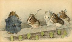 windypoplarsroom: Beatrix Potter (English author, illustrator, natural scientist and conservationist;