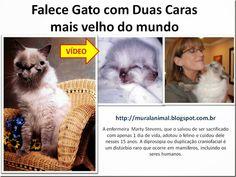Mural Animal: Falece Gato com Duas Caras mais velho do mundo