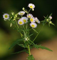 wikiHow to Plant Wildflowers -- via wikiHow.com