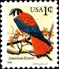 USA.  FLORA & FAUNA SERIES.  AMERICAN KESTREL.  Scott 2477 A1841, Issued 1995 May 10,  Litho., Untagged, 1€. /ldb.