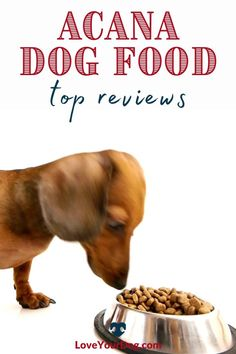 Thinking that Acana might be the next dog food for your pup? In this Acana Dog Food Review, we examine dog food costs, recall history & more! #loveyourdog #acanadogfood #dogfoodreviews Acana Dog Food, Dog Food Reviews, Grain Free Dog Food, Food Cost, Best Puppies, R Dogs, Pet Health, Dog Supplies, Healthy Choices
