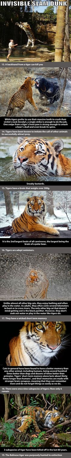 Facts about tigers...