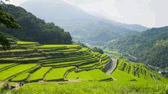 One thousand rice paddy terraces, Japan, Shodoshima Island Beautiful Places In Japan, Tokushima, Rice Paddy, Kagawa, Japan Travel Tips, Photo Reference, Places To Visit, Tours, Landscape