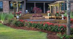 Check out Encore Azaleas in the landscape. Use our landscape gallery for inspiration when using Encore Azaleas in your own yard.