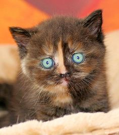 """Kittens are wide-eyed, soft and sweet, with needles in their jaws and feet."""
